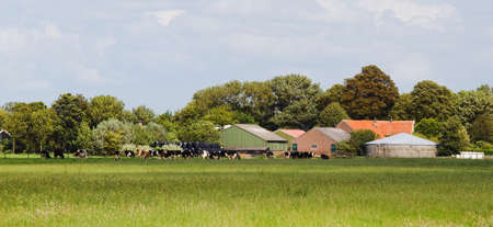 dairy farm: Dutch landscape with Dairy farm and milch cows on sunny summer day  Stock Photo