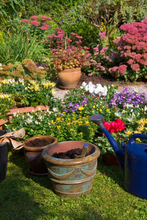 summergarden: Garden with autumn flowers in September - Planting new plants in flowerpots and -boxes