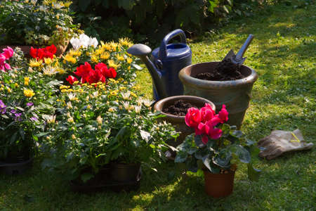 Garden with autumn flowers in September - Planting new plants in flowerpots and -boxes Stock Photo