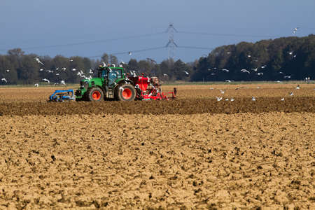 plough machine: Tractor sowing the field with swarm of birds searching for food