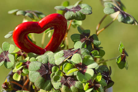Four leaf clover with a red heart for Valentine or St, Patricks day - horizontal photo