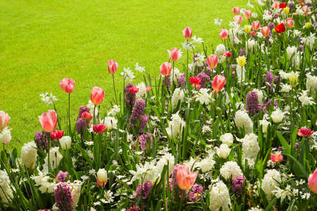 Grassfield and border with colorful mix of tulips, hyacinths and daffodils in spring Stock Photo - 13523461