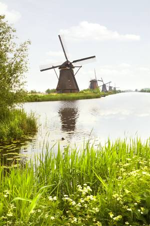 watermills: Row of windmills in Kinderdijk, the Netherlands in spring with blooming Cow parsley