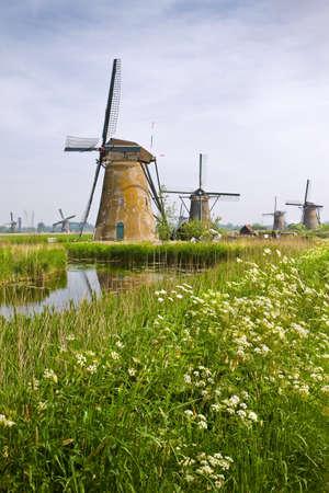 Land landschap met molens van Kinderdijk, Nederland in het voorjaar met bloeiende fluitenkruid Stockfoto