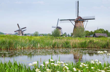 watermills: Dutch country landscape with windmills and blooming Cow parsley at the water side in spring at Kinderdijk, the Netherlands Stock Photo