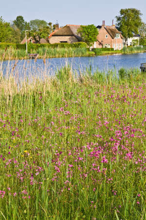 ragged robin: Dutch country landscape at the waterside with farm and fields with springflowers  Stock Photo