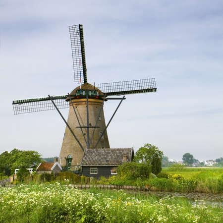 molino de agua: Molino de viento con perejil vaca flor en primavera cerca de Kinderdijk, los Países Bajos