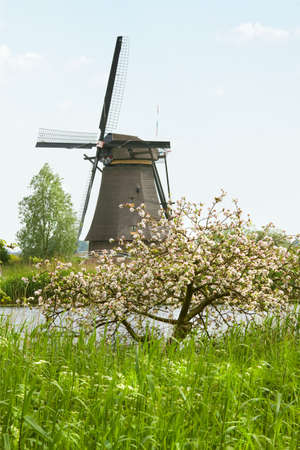 Windmill at Kinderdijk, the Netherlands in spring with blossoming  apple tree photo