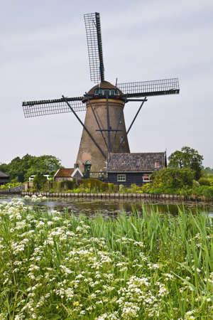 MOLINOS DE VIENTO: Molino de viento en Kinderdijk, los Países Bajos en la primavera de vaca con perejil en flor
