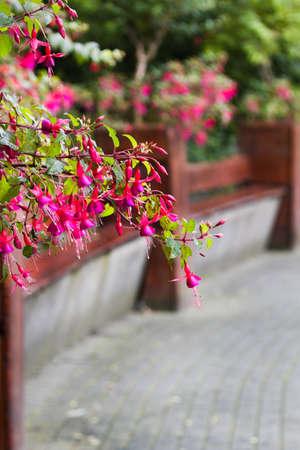 flores fucsia: Bancos redondas y flores de verano en parque Foto de archivo