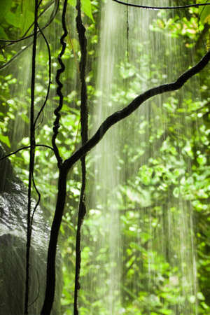 Jungle view with falling water, rocks and trees - vertical  Stock Photo