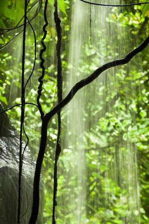 vertical: Jungle vista con la ca�da de agua, rocas y �rboles - vertical Foto de archivo