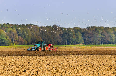 tillage: Tractor plough the field with swarm of birds searching for food Stock Photo