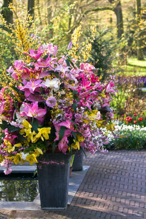 bulb tulip: Big vases made up with colorful lilies and spring flowers in early morning sun