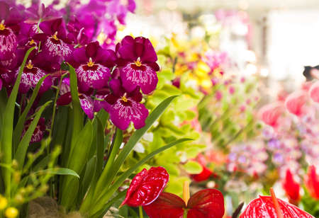 Colorful and decorative collection of Orchid flowers and Anthurium photo