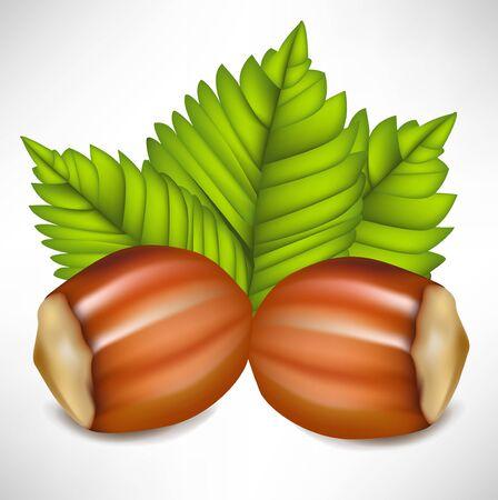 hazelnut: two hazelnuts in shell arrangement
