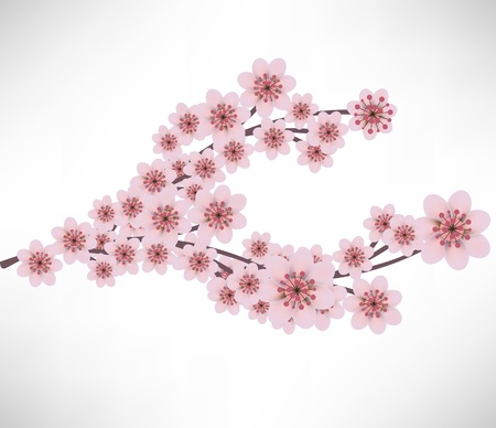 peach tree: apricot flowers branch Illustration