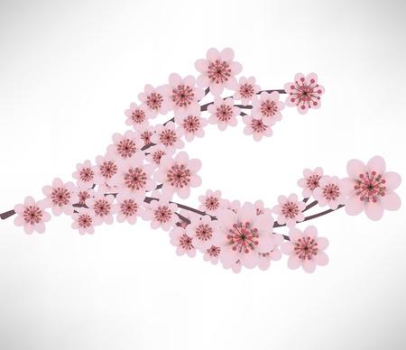 flor de durazno: flores rama de albaricoque Vectores