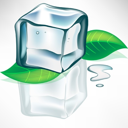 melting ice cube with mint leaves