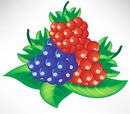 assorted berry on leaves Stock Vector - 10852260