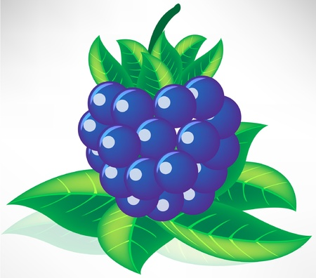 fresh blueberry on leaves isolated Stock Vector - 10852229