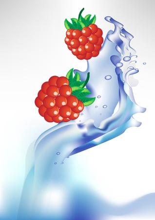 fresh berry in splash of water Stock Vector - 10852197