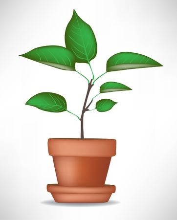 new plant: growing plant in pot