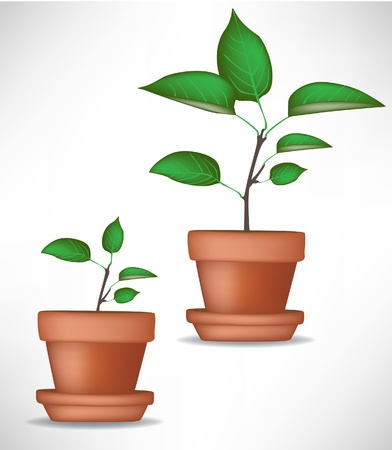 rural development: baby plant growing plant isolated