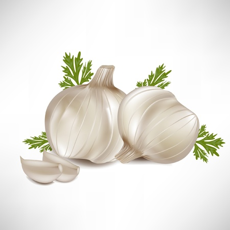 garlic with garlic cloves isolated