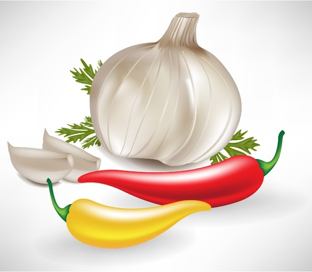 spice market: garlic and hot peppers isolated on white Illustration