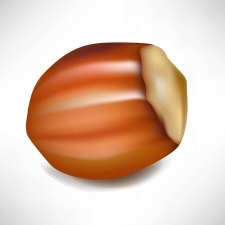 hazelnut: hazelnut in shell isolated on white Illustration