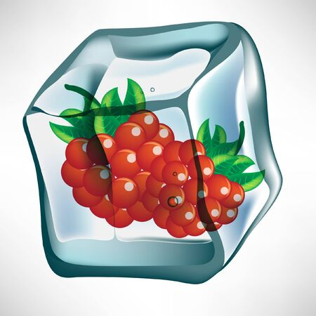 ice cube: berry in ice cube Illustration