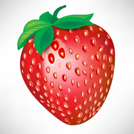 single strawberry isolated on white background Stock Vector - 10886864
