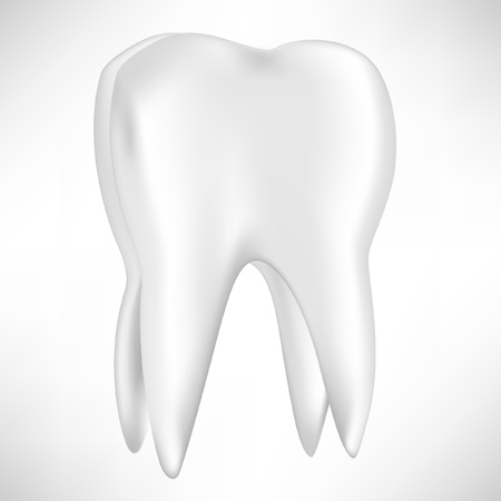 molar: single tooth isolated on white background