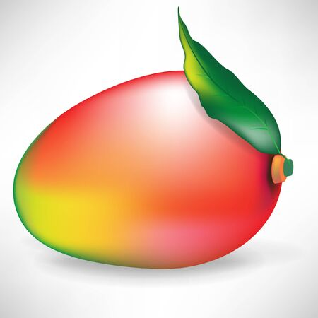 single mango fruit with leaf isolated on white background Stock Vector - 10888115