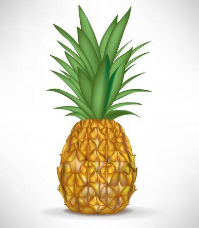 fruited: fresh single pineapple isolated on white background