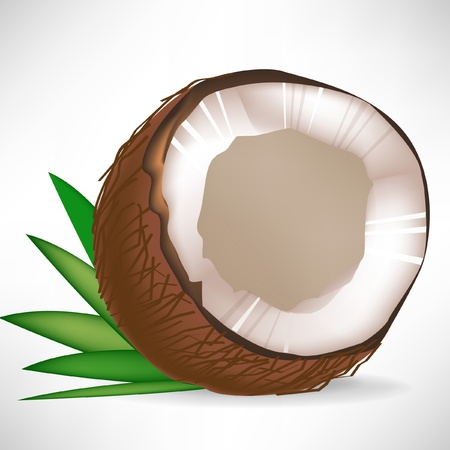 single broken coconut with leaves isolated on white background Vector