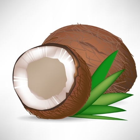 coconut trees: single cracked coconut and whole coconut with leaves isolated