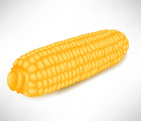 corncob: single corncob isolated on white background Illustration