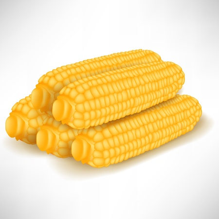 pile of corncobs isolated on white background Vector