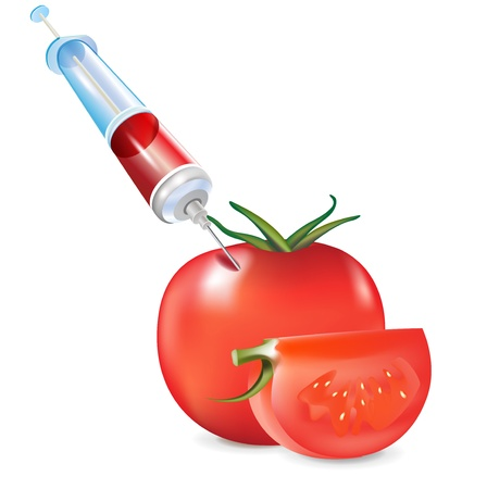 unnatural: genetic modification of vegetable; tomato and syringe isolated Illustration