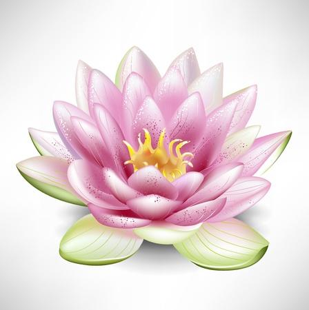 꽃이 만발한: 하나의 열린 꽃이 만발한 연꽃 일러스트