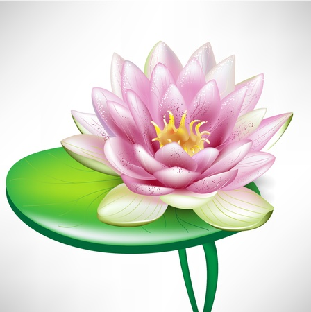 blooming. purple: single beautiful lotus flowers on leaf