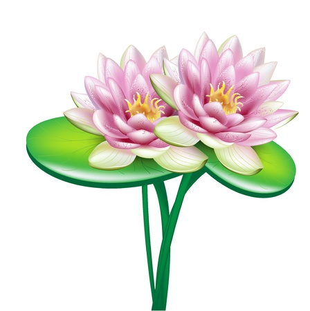 meditation isolated white: two open lotus flowers in bouquet on white Illustration
