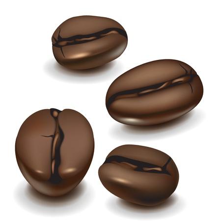 coffe bean: cuatro granos de caf� de la ilustraci�n realista