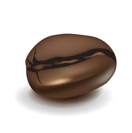 chicchi caff� su sfondo bianco: singolo realistica illustrazione chicco di caff�