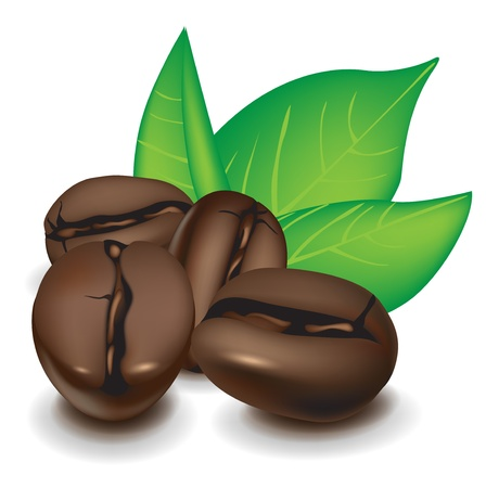 신선한 원두 커피와 잎의 그룹 일러스트