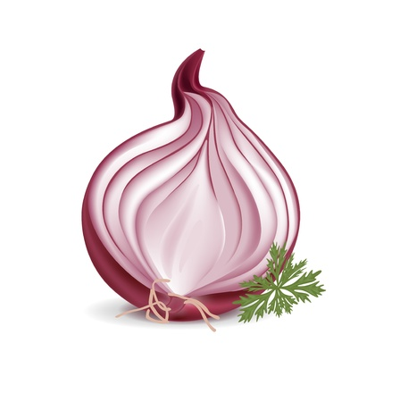 onion isolated: sliced red onion with parsley isolated on white