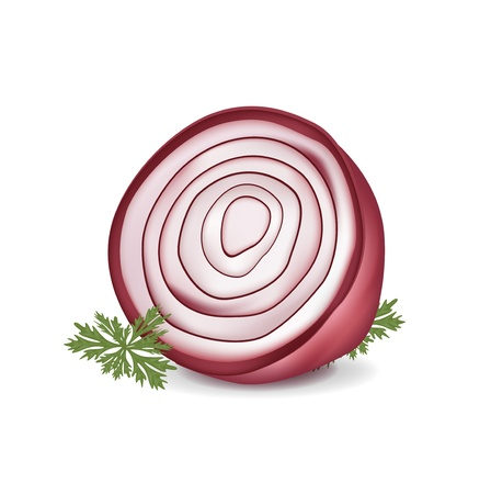 cut in half red onion isolated on white Vector