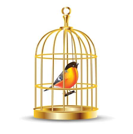 trapped: golden bird cage with bird inside isolated